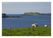 Isle of Skye with Sheep