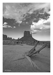 Driftwood & Mitten in Monument Valley