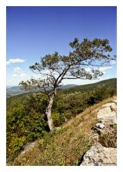 Bending Tree