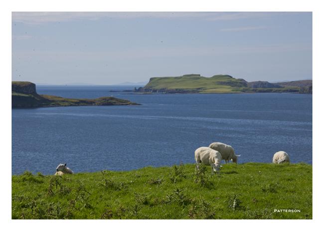 Isle of Skye Sheep Scotland UK United Kingdom