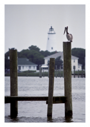 Ocracoke Lighthouse and Pelican