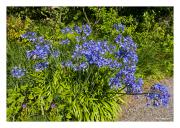 Flower Garden at Armadale Castle