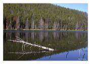 Yellowstone Reflection