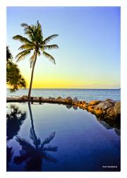 Palm Reflection